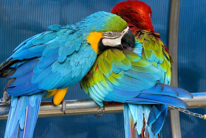 urocza papuga fotografia stock