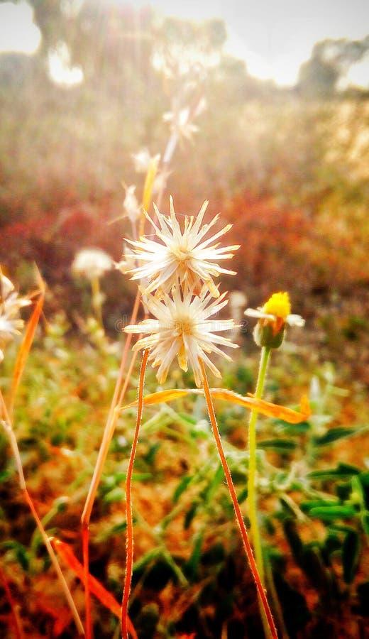 Urocza para kwiat obraz stock