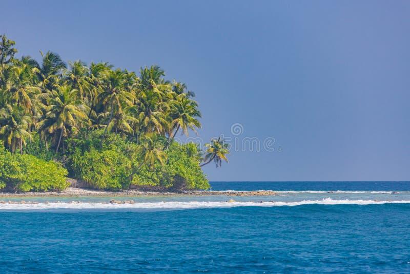Urocza plaża z turkus zieleni i wody drzewkami palmowymi na Tropikalnej wyspie obraz stock