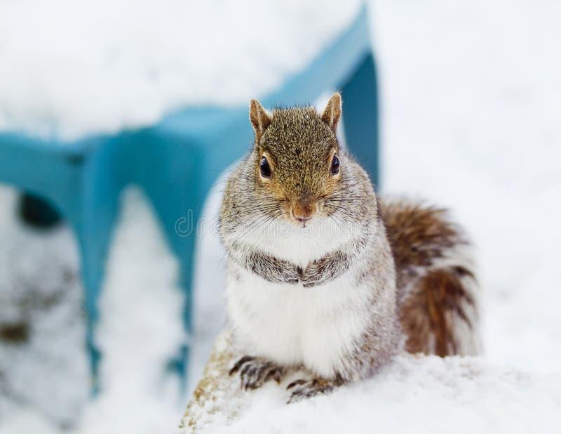 Urocza wiewiórka obraz stock