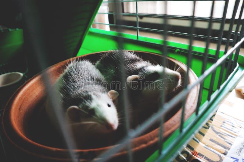 urocze zwierzątko zdjęcia royalty free