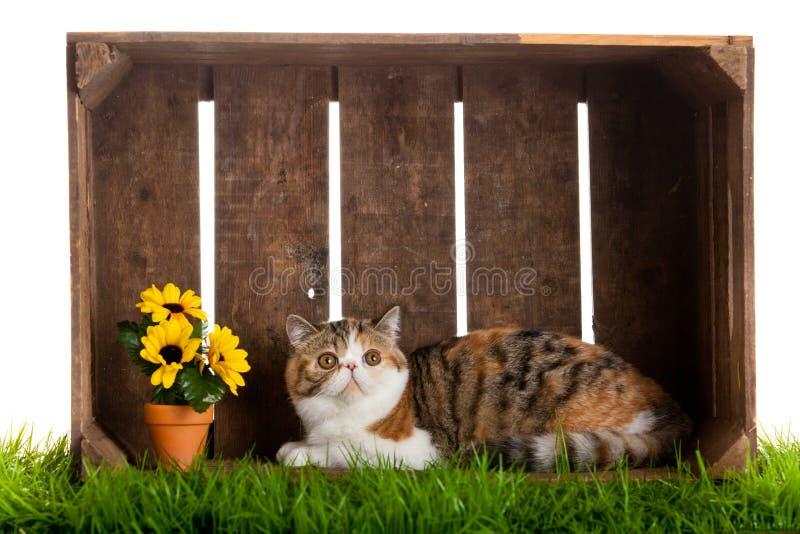 Download Uroczego Kota Drewniany Pudełko Odizolowywający Na Białym Tle Zdjęcie Stock - Obraz złożonej z uwaga, kwiaty: 53784942