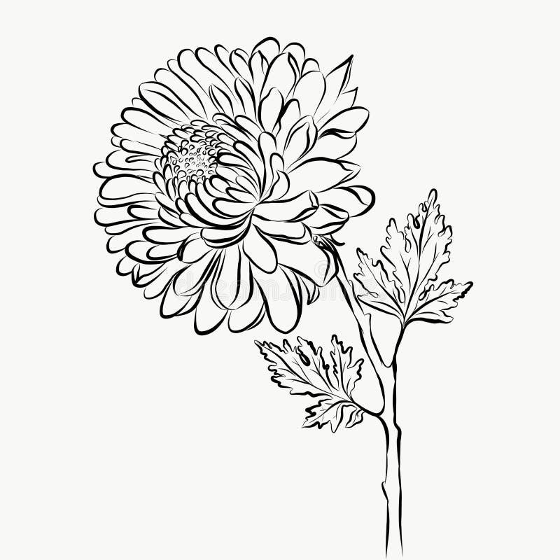 Uroczego Odosobnionego dużego kwiatu nakreślenia grafical farba obrazy stock