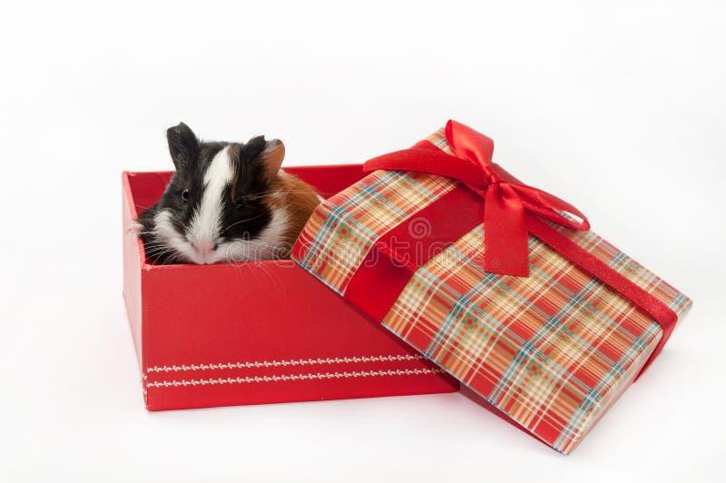 UROCZY ŚLICZNY dziecko królika doświadczalnego rewolucjonistki pudełko zdjęcie stock