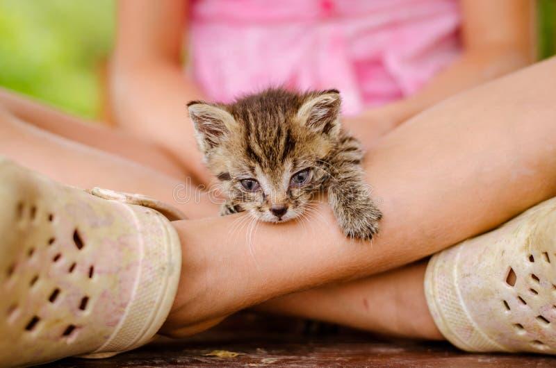 Uroczy śliczny kot próbuje wychodził od dziewczyny zdjęcia royalty free