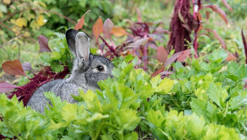 Uroczy, Śliczny, mały, szary królik, obrazy stock
