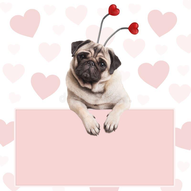 Uroczy śliczny mopsa szczeniaka pies z serce diademem, wiesza na pustym jasnoróżowym promocyjnym znaku fotografia royalty free
