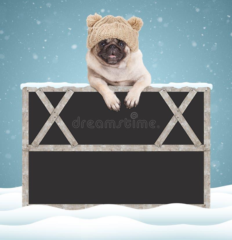 Uroczy śliczny mopsa szczeniaka pies z trykotowym kapeluszem, wiesza z łapami na pustym blackboard znaku z drewnianą ramą na błęk zdjęcia royalty free
