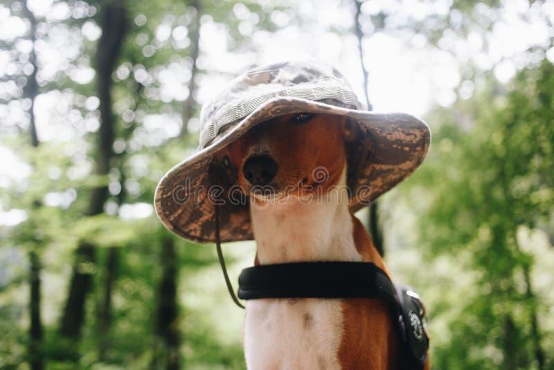 Uroczy śliczny pies w ludzkim plenerowym kapeluszu obrazy stock