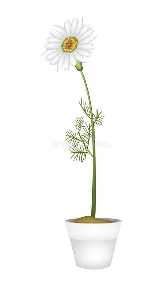Uroczy Świeży Chamomile w Ceramicznym kwiatu garnku ilustracja wektor