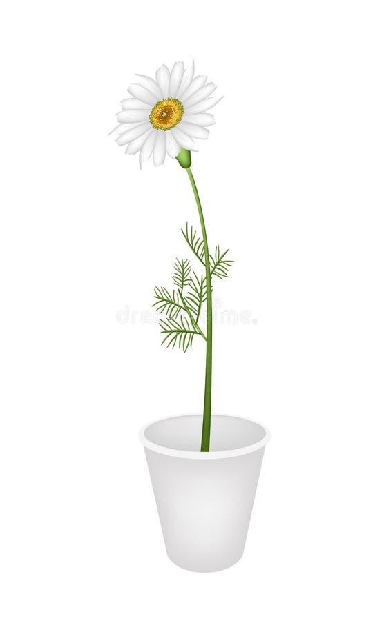 Uroczy Świeży Chamomile w kwiatu garnku ilustracji