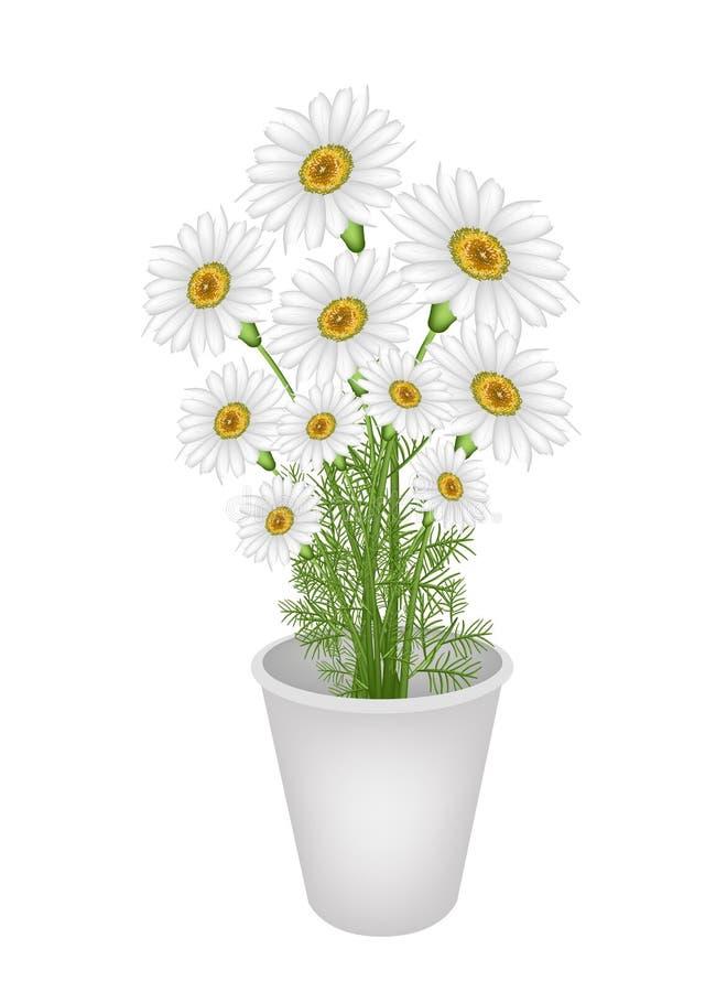 Uroczy Świeży Chamomile w kwiatu garnku ilustracja wektor