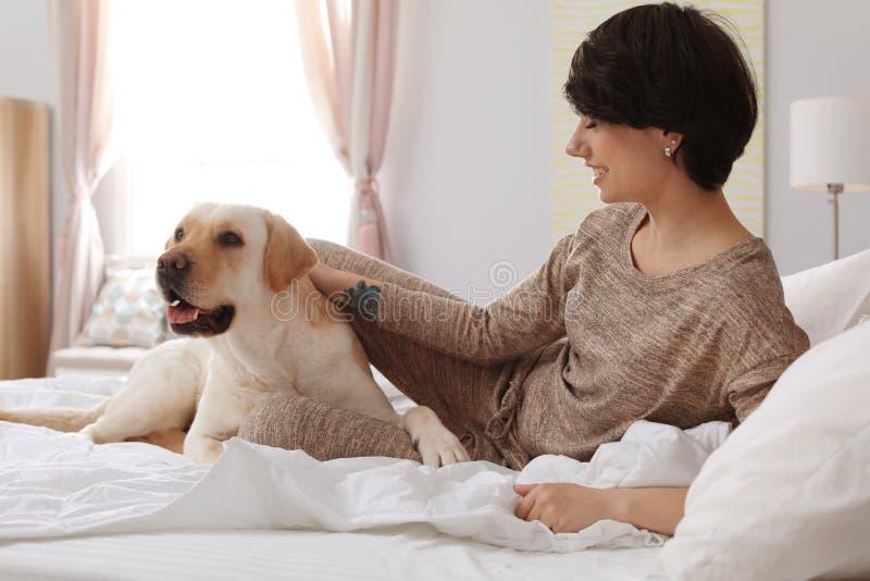 Uroczy żółty Labrador retriever z właścicielem na łóżku indoors obraz royalty free