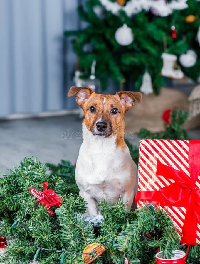 Uroczy boże narodzenie pies fotografia royalty free