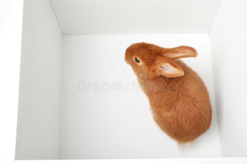 Uroczy brown królik inside fotografia stock