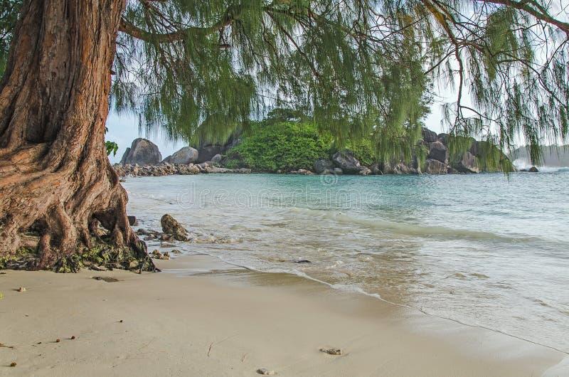 Uroczy brzeg morze z białą błękitne wody pod drzewem i piaskiem zdjęcia royalty free