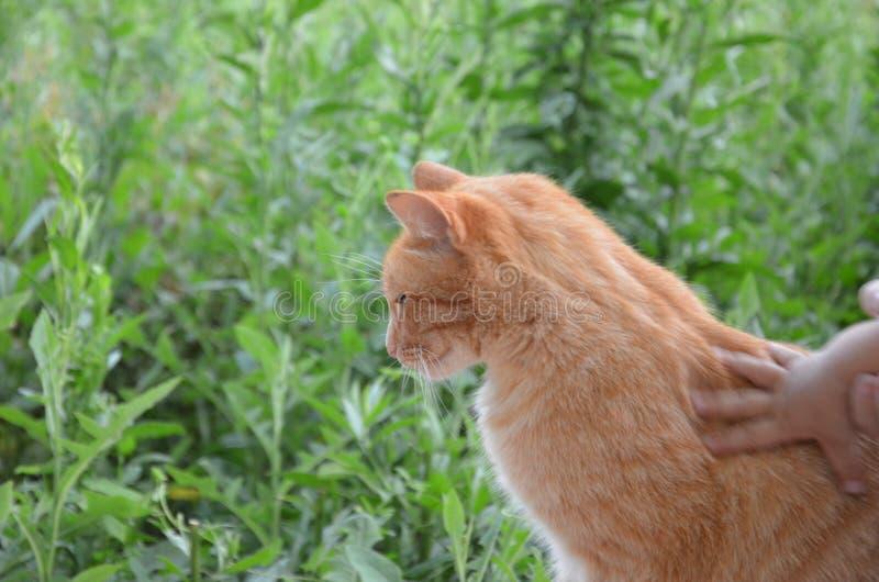 Uroczy czerwony kot przeciw tłu outside w ogródzie zielony ulistnienie obrazy royalty free
