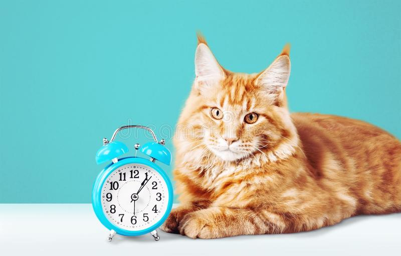 Uroczy czerwony kot z zegarem na stole fotografia stock