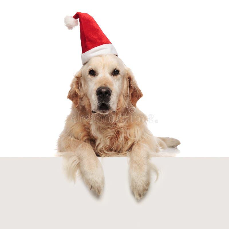 Uroczy golden retriever jest ubranym Santa nakrętki relaksować obraz royalty free
