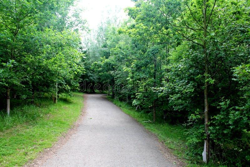 Uroczy i malowniczy drzewo wykładająca natury ścieżka dla spokojnego spaceru w Angielskim miasteczku zdjęcia stock