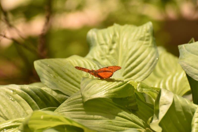 Uroczy Julia Motyli obsiadanie na luksusowym łóżku liście zdjęcie stock