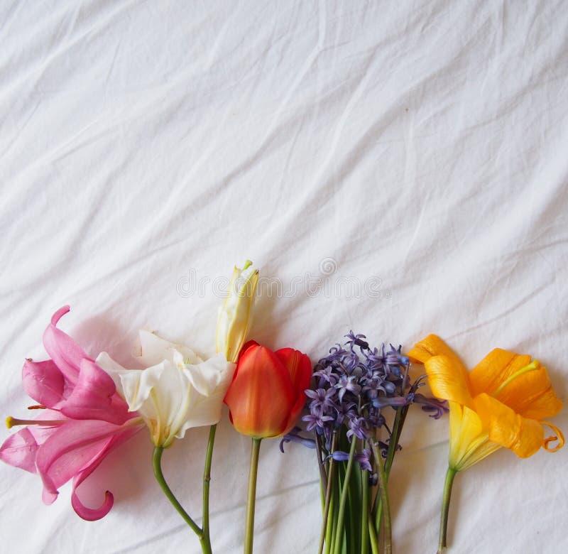 Uroczy kolor żółty, biały i różowy, lilly i czerwony tulipan zdjęcie stock