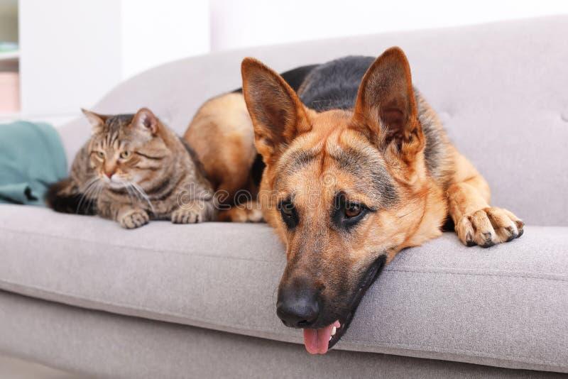 Uroczy kot i psi odpoczywać wpólnie na kanapie indoors zdjęcie royalty free