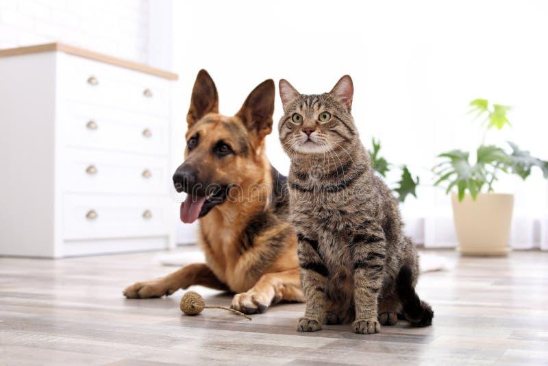 Uroczy kot i psi odpoczywać wpólnie w domu zdjęcie stock