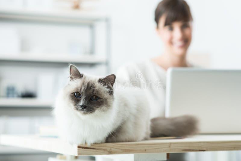 Uroczy kot pozuje na biurku zdjęcie royalty free