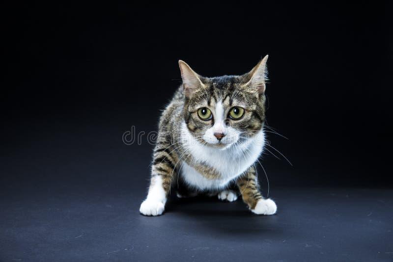 Uroczy kota czerni tło zdjęcia royalty free