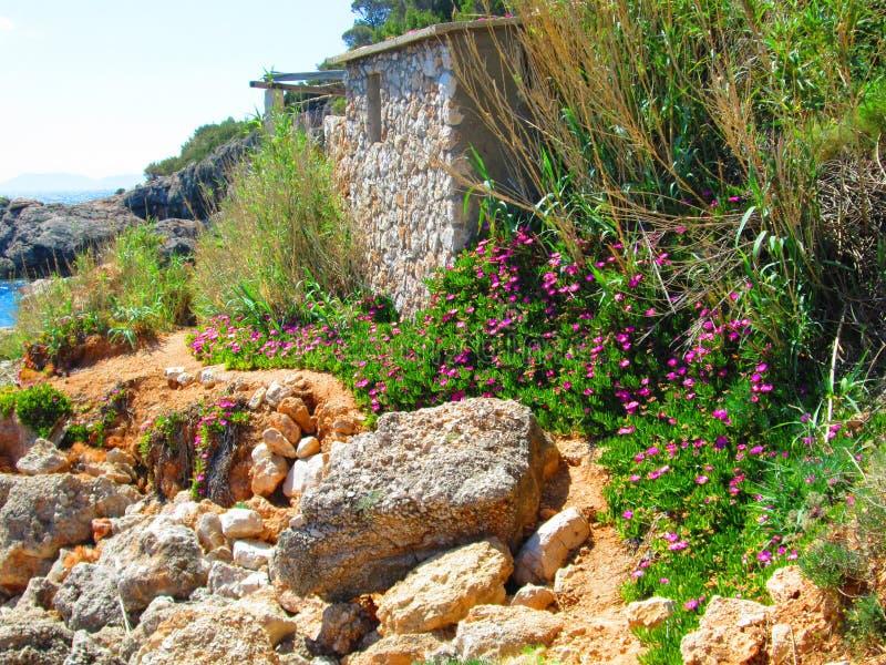 Uroczy kwiat na wybrzeżu zdjęcia stock