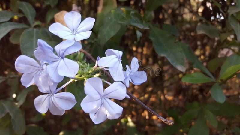 Uroczy kwiaty zdjęcia stock