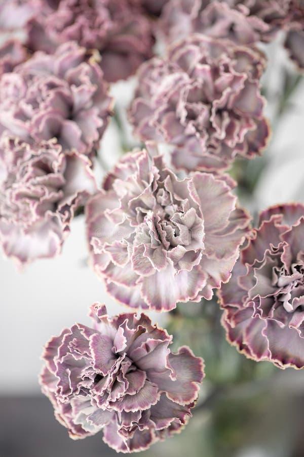 Uroczy kwiaty w szklanej wazie Piękny bukiet goździk jest niezwykłym kolorem Kwiecisty skład, światło dzienne Lato obraz royalty free