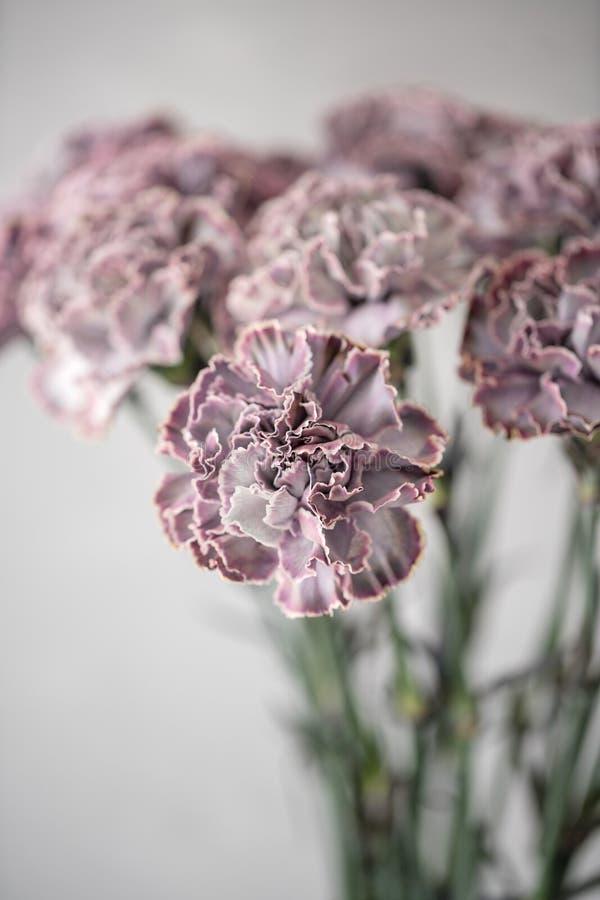 Uroczy kwiaty w szklanej wazie Piękny bukiet goździk jest niezwykłym kolorem Kwiecisty skład, światło dzienne Lato obrazy stock