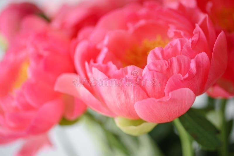 Uroczy kwiaty w szklanej wazie Piękny bukiet peonia koralowy urok poniekąd Kwiecisty skład, światło dzienne wally zdjęcia stock