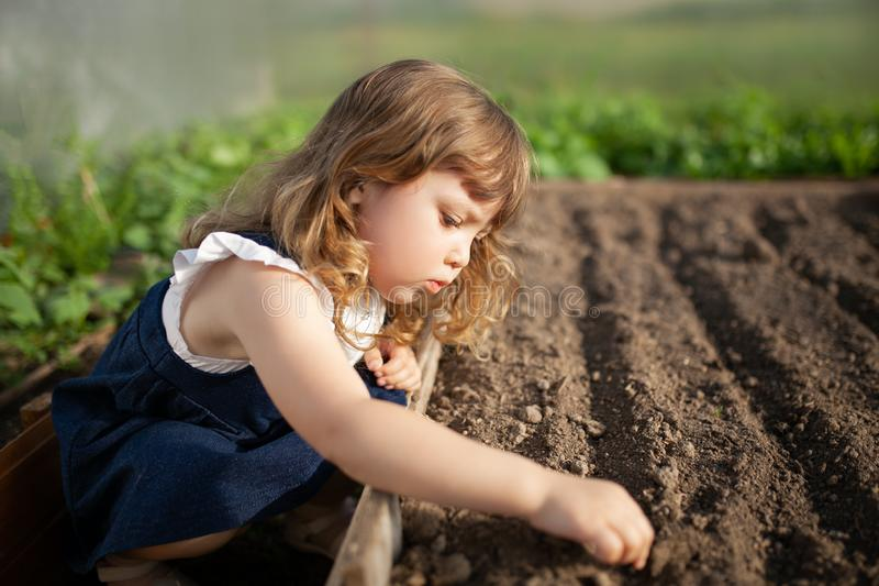 Uroczy małej dziewczynki flancowania ziarna w ziemi przy szklarnią zdjęcia royalty free