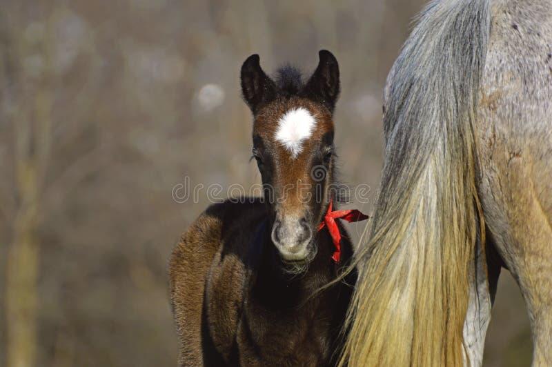 Uroczy Mały koń zdjęcie stock