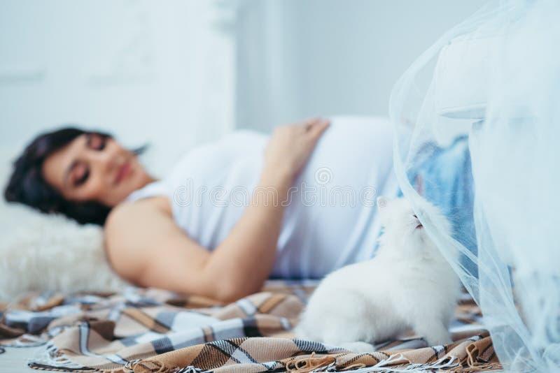 Uroczy portret mały puszysty królik wącha tkankowego tiul przy zamazanym tłem piękny zdjęcia royalty free