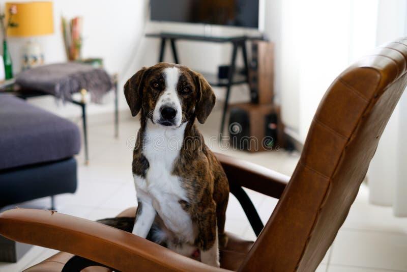 Uroczy psi lewy samotny przygotowywający dla bałaganić up zdjęcie royalty free