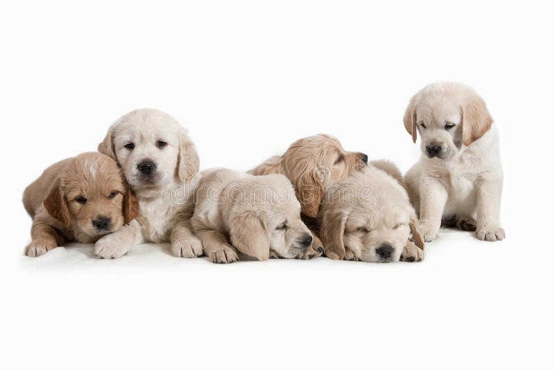 Uroczy psy obraz royalty free