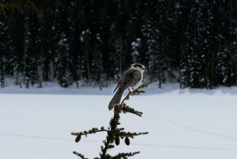 Uroczy ptak i śnieg zdjęcia royalty free