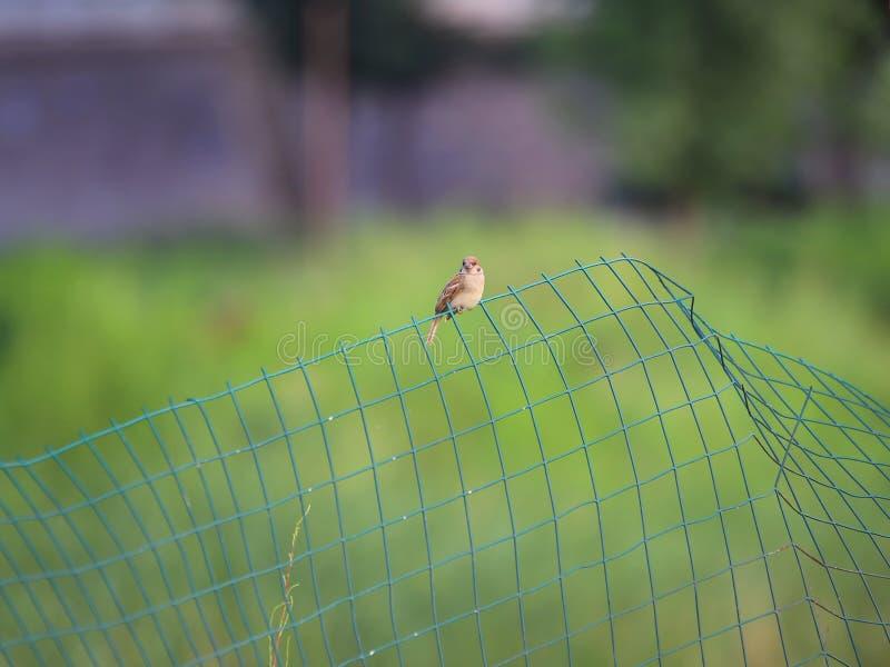 Uroczy ptak na krawędzi Żółtej rzeki fotografia stock