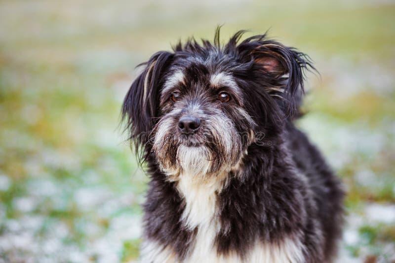 Uroczy puszysty pies outdoors zdjęcia royalty free