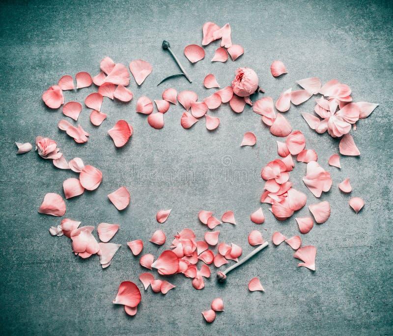 Uroczy różowi pastelowi płatki kwiaty na turkusowym nieociosanym tle, mieszkanie nieatutowy, odgórny widok, rama fotografia stock