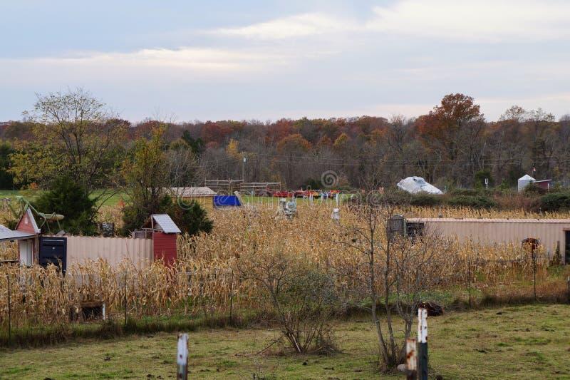 Uroczy spadku dzień Na gospodarstwie rolnym zdjęcia royalty free