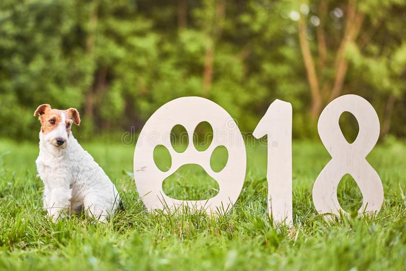 Uroczy szczęśliwy lisa teriera pies przy parkiem 2018 nowy rok greetin obrazy stock