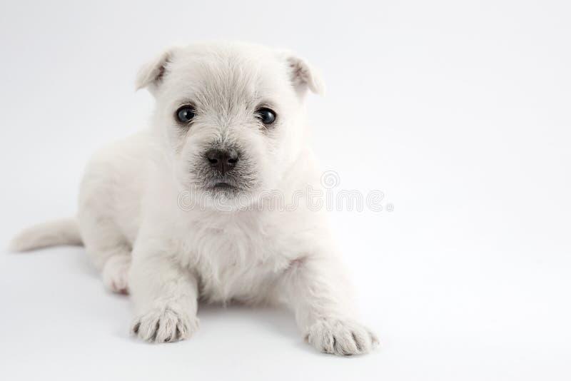 Download Uroczy szczeniak obraz stock. Obraz złożonej z ssak, pies - 28960155