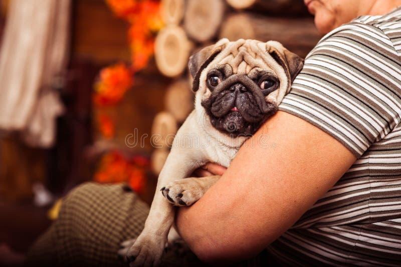 Uroczy szczeniaka mops na swój owner& x27; s ręki zdjęcia royalty free