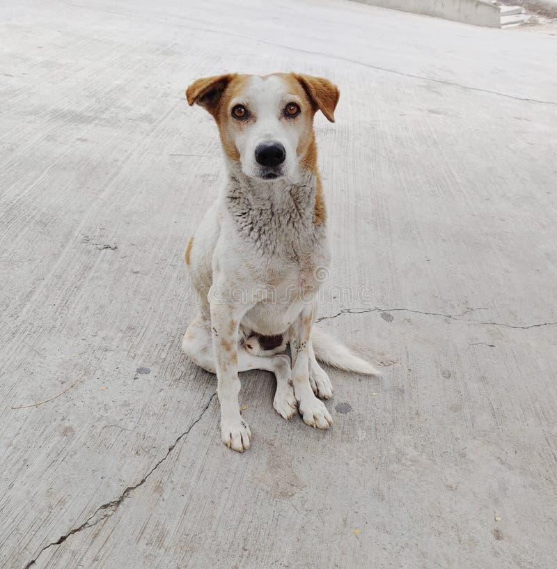 Uroczy ulica pies fotografia stock