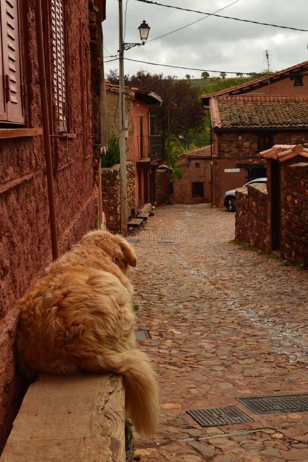 Uroczy Złoty Psi Odpoczywać Na ławce W Malowniczej wiosce Z Czarnymi Łupkowymi dachami W Madriguera Zwierzę wakacje Podróżują Wie obrazy royalty free